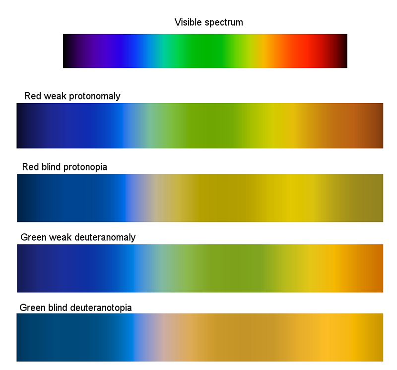 simulation of color vision differences